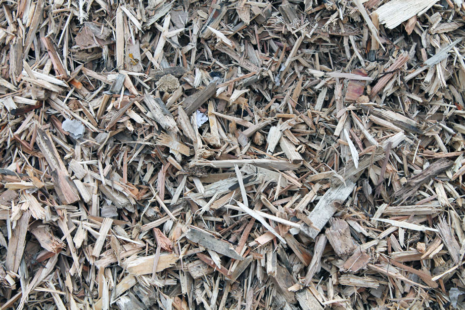 biomassa3